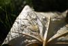 Drops of autumn rain (eirikj) Tags: leaf drop water autumn fall closeup grass canon eosm 22mm