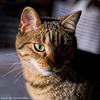 _DSC0061_v1 (Pascal Rey Photographies) Tags: chat chatte cat katze gatto animalerie animaux animals animales animali tiere nikon d700 luminar digikam digikamusers pascalreyphotographies photographiecontemporaine photos photographie photography aruba abw
