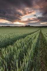Lothians-59.jpg (Chris_Hoskins) Tags: cammoestate wwwexpressionsofscotlandcom scottishlandscapephotography scotland edinburgh scottishlandscape cammo sunset landscape centralscotland