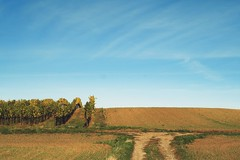 Rural simplicity (No_Mosquito) Tags: vineyard sky earth fields landscape view empty dirt blue brown autumn fall austria canon powershot g7xmarkii