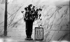 (Victoria Yarlikova) Tags: cemetery film monochrome 35mm analog retro vintage zenit122 smallformat cimitero pellicola scanned dust grain iso100