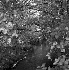 Veins of earth (Rosenthal Photography) Tags: rolleiflex35f 20171006 ff120 zeven mittelformat königbergerstrasse bnw städte schwarzweiss bw mehde ilfordhp5 analog asa400 dörfer siedlungen river veins landscape mood trees autumn mediumformat blackandwhite 6x6 rollei rolleiflex sk schneiderkreuznach xenotar 75mm ilford hp5 hp5plus epson v800 35f