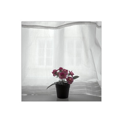 Good morning. ( Prague ) (José Luis Cosme Giral) Tags: goodmorning urbannature plant window ricoh gr prague czechrepublic minimalism