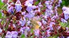 7 (bebsantandrea) Tags: levanto baiedellevante liguria natura campagna wild giardino fiori rosa pesco ciliegia fico ficodindia carciofo formica topo libellula mosca zanzara grillo ape vespa lucertola lizard farfalla butterfly riccio cimice ramarro afide pianta albero ragnatela gocce raindrop microcosmo sfingedelgalio farfallacolibrì ragno spider limone arancio arancia boragine impollinatrice cicala autunno estate primavera inverno bruco margherita zucca lampone fragola mantidereligiosa gallina coniglio coccinella kiwi