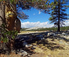 Burled Frame, Tuolomne Meadows, Yosemite 9-3-17 (inkknife_2000 (9 million views)) Tags: yosemitenationalpark tuolumnemeadows trees burles oldtrees pines forests california usa landscapes rocks skyandclouds burledwood shadows dgrahamphoto