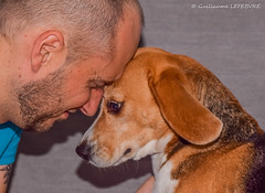 Tendresse (Guillaume7762) Tags: chien dog beagle homme viril tendresse complice complicité