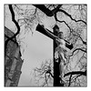 INRI (soda bicarbona) Tags: inri sky cathedral clouds trees crucifix city branches blackwhite