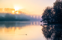 Morgennebel am Obersee (O.I.S.) Tags: nebel fog mist neblig misty foggy weather wetter dunst obersee bielefeld lake see wasser water lakeside sunrise sun sonne sonnenaufgang herbst fall autumn canon eos m3 55200 55 200