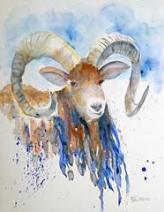 516 Mufflon (Wuwus Bilder) Tags: mufflon aquarell watercolour