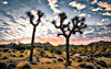 Dawn at Joshua Tree (Six Sigma Man (2.900.000 views)) Tags: dawn sunrise desert joshuatreenationalpark joshuatree california nikon nikond3200