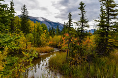 Canmore, Alberta (Jane Olsen) Tags: autumn fall colors water creek trees mountain sky clouds landscape