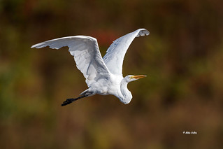 Not much around other than a few egrets...