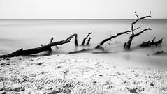 umgefallen (petra.foto busy busy busy) Tags: fotopetra canon 5dmarkiii natur dars fischland meklenburgvorpommern strand ndfilter meer ostsee baum wasser langzeitbelichtung totholz schwarz weis monocrom