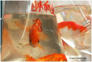 Happy Fish 子非魚,安知魚之樂?- Hong Kong XP7183e
