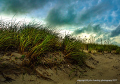 Windswept (T i s d a l e) Tags: tisdale windswept dunes dunegrass seaoats boguebanks summer july 2017 easternnc