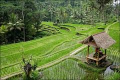 Indonesian postcard (Bali)