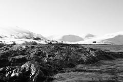 White and bright (raymond.riise) Tags: coast blackanwhite shore sea northcape norway arctic white sun bright