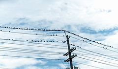 birds on wires (Dotsy McCurly) Tags: birds wires sky nature beautiful linesandstripes happysmileonsaturday hsos nikond750 tamron18400mmf3563 nj newjersey