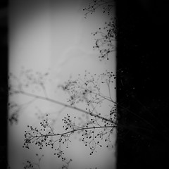 roadside/道端 (s_inagaki) Tags: roadside plants tokyo snap monochrome blackandwhite bnw bw 道端 植物 東京 スナップ モノクロ 白黒