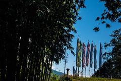 Gocha-la trek in Sikkim, India (David Ducoin) Tags: asia bamboo dzongri gochala green hike himalaya india kangchenjunga nationalpark nature prayerflag sikkim spirituality stilllife trek gangtok in