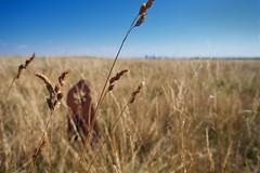 Nose Hill close up (jmschrei) Tags: alberta bokeh calgary da15ltd grass landscape marker nosehill pentaxk5 sky