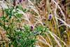Grass #004 (shafa_rah) Tags: grass green nature flower plant aesthetic naturallight warmtones