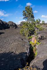 K3_P2643-HDR-sRGB (mountain_akita) Tags: hawaii kilauea maunaulu lava lavashield volcano