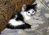 Friends New Kitty (fishmonger45) Tags: cats kittens photoshop posterized