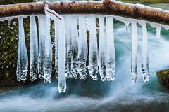 Ghiaccioli (Marte Visani) Tags: torrenteacquacheta inverno acqua ghiaccio