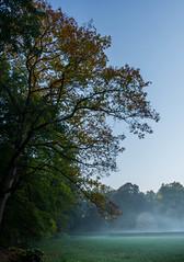 Herfst komt eraan (Jorick77) Tags: nikond7200 d7200 autumn herfst arnhem gelderland nederland oktober 160800mmf2840 nikon1680mmf284edxvr landgoed amerikaanseeik