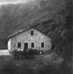 Machu Picchu in 1944 (!) (Lewitus) Tags: 1944 machupicchu scanned photo rolleicord ruins perú