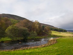 Esk in Autumn (taystar) Tags: esk river water fishing salmon mountains hills rural peaceful beautiful angus scotland scottish british britain uk cairngorms autumn foliage browns trees leaves