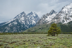 Mountains (atsubor) Tags: usa wyoming grandteton nationalpark park mountains trees