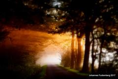 Lightroom (grafenhans) Tags: sony rx100 rx 100 carl zeiss cz carlzeiss licht light sonnenaufgang sonnenstrahlen sonne feldweg wald waldweg nebel