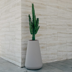 Cactus (Peter.Bartlett) Tags: vsco square m43 microfourthirds urbanarte facade olympuspenf wall kodakportra160emulation peterbartlett colour viareggio toscana italy it