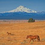 Horses at Warm Springs 3935 B thumbnail