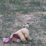 dog toy in yard 10 9 17 thumbnail