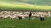 Altopiano di Asiago (beppeverge) Tags: altopianodeisettecomuni altopianodiasiago asiago beppeverge flockofsheep gregge italianlandscape italy paesaggio pastore pastori pecore sheep