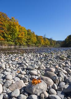 Snoqualmie River Leaf