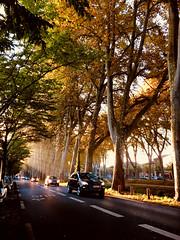 Toulouse d'Or (M a n o n C m m r s) Tags: toulouse street road cars light morning autumn garonne