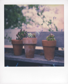Succulents on a potting bench