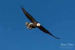 Bald Eagle launch and flight sequence - 8 of 21