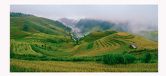 Mâm Xôi - Mù Cang Chải (trieu_van_194) Tags: landscape panorama vietnamlandscape vietnamtravel travel travelphotograper traveling