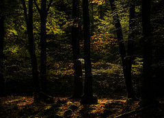 Zonnestraaltjes (Bram Meijer) Tags: kootwijkerzand kootwijk bos woods forest wald bomen trees zonlicht sunrays herfst herbst autumn automne