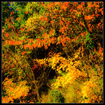 Playing around with autumn colors (2) thumbnail