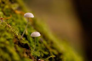 Microshrooms #2