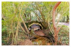 Un petit pont dans le parc de Cayac (Gironde, France) (mibric) Tags: wood brige pont france rivière river landscape paysage