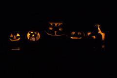 20171029_Halloween_jack-o-lanterns_0033.jpg (Ryan and Shannon Gutenkunst) Tags: jackolanterns halloween crafts pumpkins