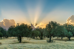 20171028-DSC00018 (Häjk) Tags: sonya7rii ef247028liiusm metabonessmartiv rhodes rhodos greece griechenland