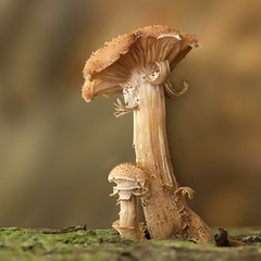 Paddestoel - Clingendael (mariandeneijs) Tags: paddenstoel paddestoel mushroom toadstool fungi bos park clingendael landgoedclingendael landgoed